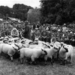 Rural sheep sale