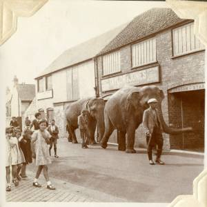 CJS001 Elephants, Millpond Street, Ross-on-Wye, 1938.jpg