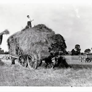 Harvest time, loading the wagons, Wellesbourne 1932