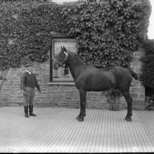 G36-300-08 Horse with groom in paved courtyard.jpg