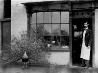 Taxidermist shop, Fair Green, Mitcham