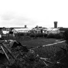 Allotments at Horsley Hill Road