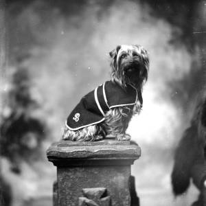 G36-150-02 Portrait of small Yorkshire terrier wearing a monogrammed coat, seated on ornamental pillar.jpg