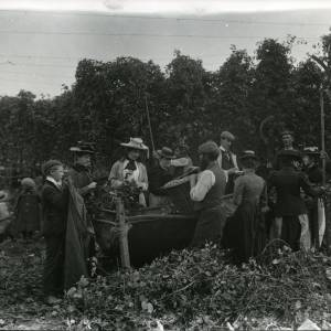 G36-217-06 Hop-picking men with bine cutters, 6 women by crib, men & children looking on.jpg