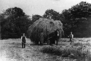 Haymaking in Morden Hall Park