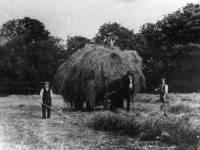 Haymaking in Morden Hall Park