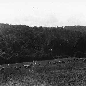 Aconbury Wood, 1930, view of