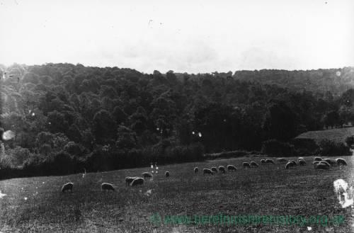 Aconbury Wood, 1930, view of