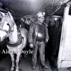 Ponies Working Underground at Ellington Colliery