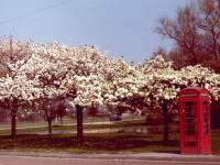 Cranmer Road: Cranmer Green