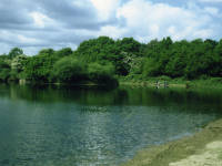One island pond , Mitcham Common