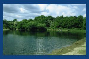 One island pond , Mitcham Common