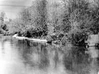Ravensbury Park - The Wandle