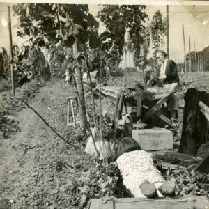 CJS022 Hop picking, c.1930s.jpg