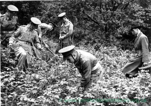 Army personnel searching in the undergrowth.