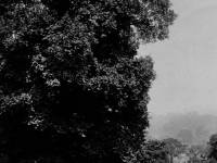 Wimbledon Park:  View from Arthur Road