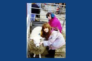 Deen City Farm: Petting a sheep