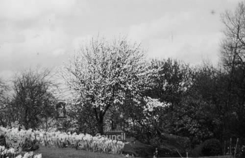 Jervis Park, York Avenue, Jarrow