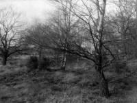 Woods on Wimbledon Common