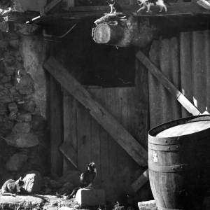 Farmyard scene with four cats