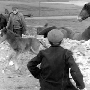 Two youths with Welsh mountain ponies.