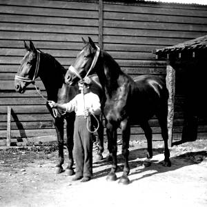 G36-244-16 A groom holding a pair of black horses in a yard.jpg