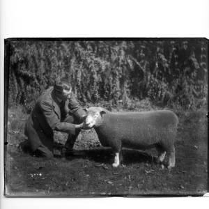 G36-331-01 Man with sheep.jpg