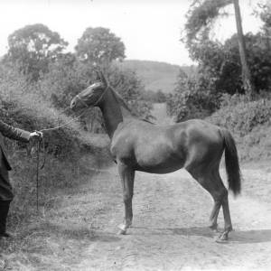 G36-247-09 Same man and mare as G36-247-08 .jpg