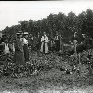 G36-217-08 Hop-picking men with bine cutters, 6 women by crib, men & children looking on.jpg
