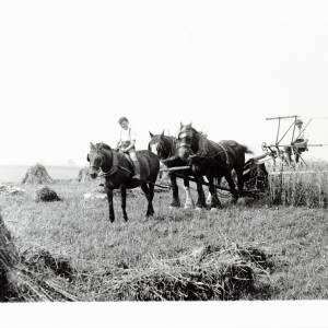 Harvest Time, using a self-binder, 1932