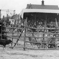 North Recreation Ground, Bootle, sheep dog trials, 1934