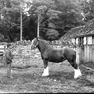 G36-326-06 Man posing with heavy horse.jpg