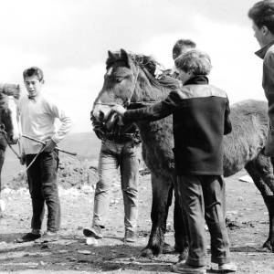Two Welsh mountain ponies with five boys.