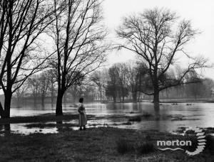 Morden Hall Park: flooding
