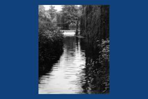 Weir at Ravensbury
