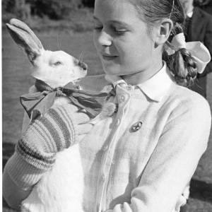 Harvey the rabbit with owner at a show.