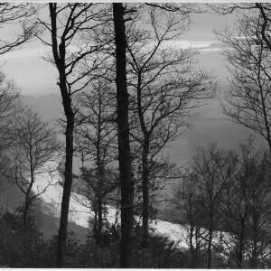 665 - Trees in winter on hill, river below