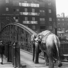 Jenny the Elephant at North Shields Ferry Landing