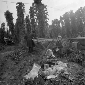 Children in a Marden Hop Yard, 1967