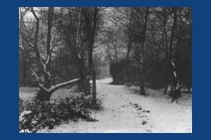 Winter scene, Wimbledon Common