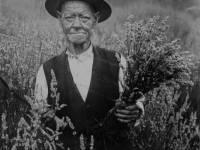 William Mitchell, 94  - last of the Mitcham lavender growers