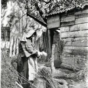 Osier Stripping, willow