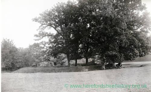 Lemore Moat, Eardisley
