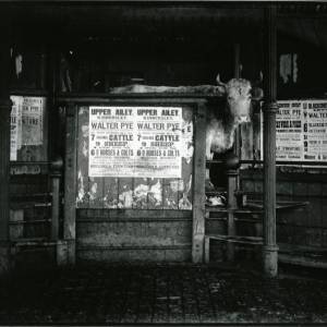 G36-015-10 Cattle market and cow with 'Walter Pye' advertisements.jpg