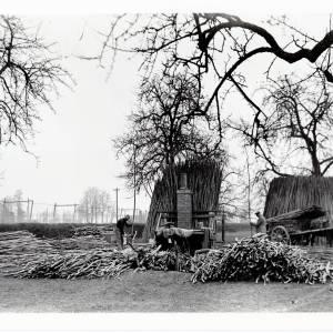 Hops, preparing hop poles 1934