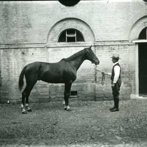 G36-218-10 Horse & handler in yard .jpg