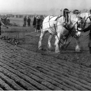 Ploughing with horses 2