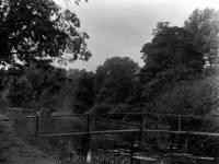 Wandle at Ravensbury Manor