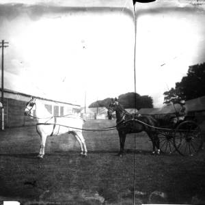 G36-543-16 Lady in horse-drawn whisky at a showground.jpg