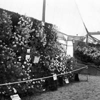 Southport Flower Show Exhibit in 1924